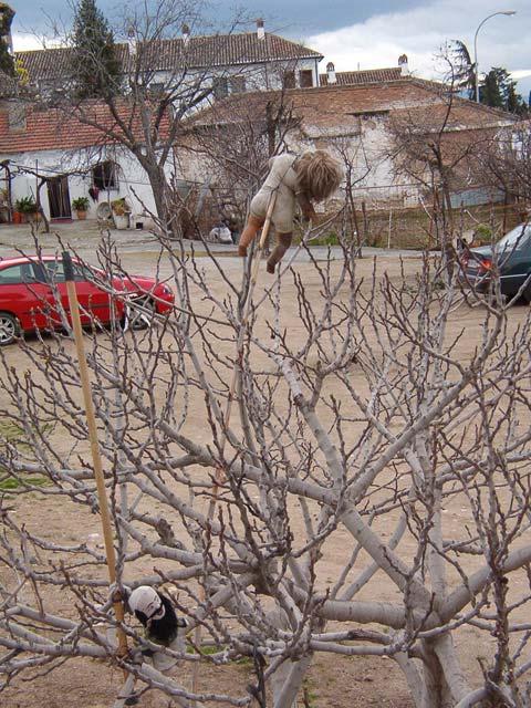 Árbol con espantapajaros