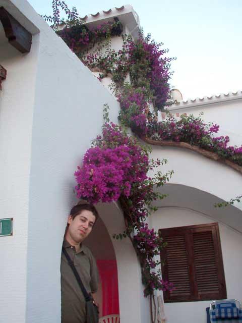 Bajo las flores